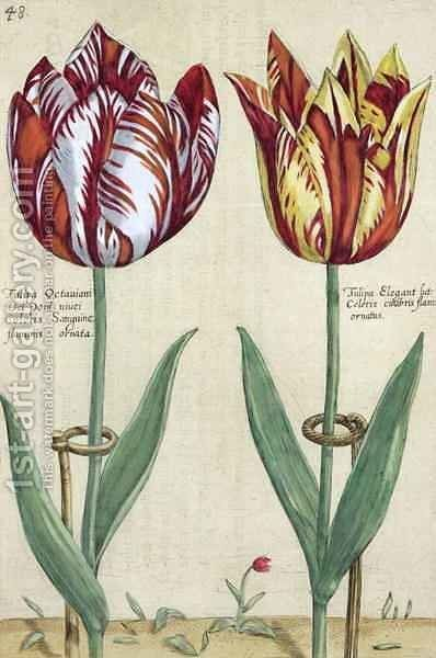 Tulipa Octaviani del pont, and Tulipa Elegant, from Hortus Floridus, published 1614-15 by Crispijn van de Passe - Reproduction Oil Painting