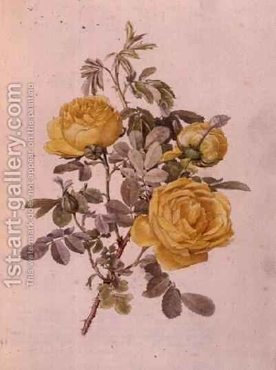 Rosa Genus, No.10, 755, c.1910 by Alfred Parsons - Reproduction Oil Painting