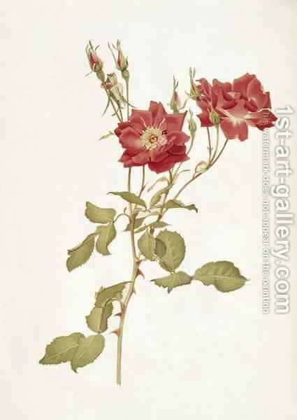 Rose Bourbon by Alfred Parsons - Reproduction Oil Painting