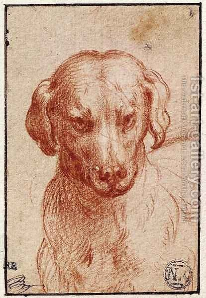 Head of a Dog by Girolamo Francesco Maria Mazzola (Parmigianino) - Reproduction Oil Painting