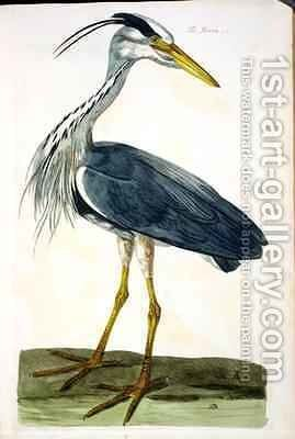 The Heron Ardea cinerea plate from The British Zoology, Class II Birds, engraved by Peter Mazell fl.1761-97 1766 by (after) Paillou, Peter - Reproduction Oil Painting
