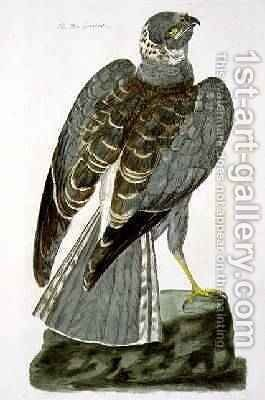 The Hen Harrier Circus cyaneus plate from The British Zoology, Class II Birds, engraved by Peter Mazell fl.1761-97 1766 by (after) Paillou, Peter - Reproduction Oil Painting