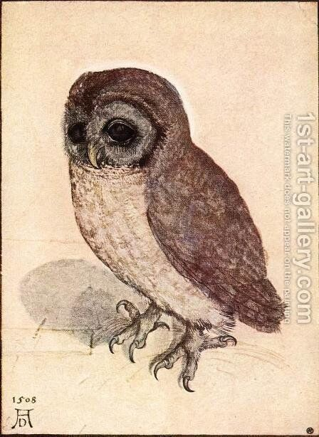 The Little Owl by Albrecht Durer - Reproduction Oil Painting