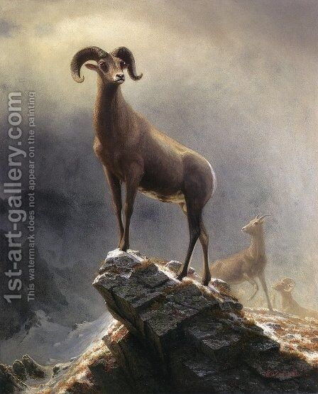 Rocky Mountain Sheep 1 by Albert Bierstadt - Reproduction Oil Painting