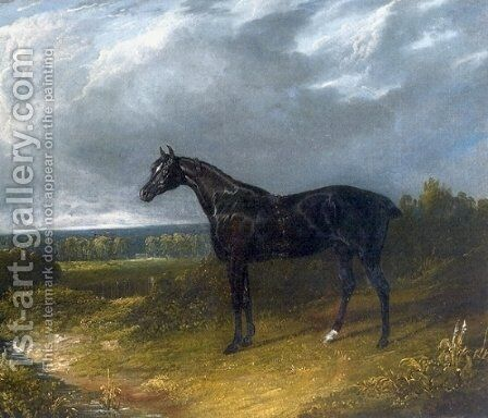 Black Stallion in a Field Horse by John Frederick Herring Snr - Reproduction Oil Painting