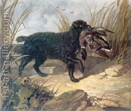 Irish Water Spaniel Retrieving a Duck by John Frederick Herring Snr - Reproduction Oil Painting
