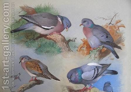 A Wood Pigeon, A Stock Dove, A Turtle Dove, A Rock Pigeon by Archibald Thorburn - Reproduction Oil Painting