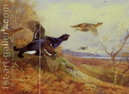 Blackgame in Flight by Archibald Thorburn - Reproduction Oil Painting