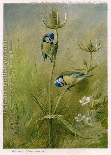 Blue Tits on Teasel by Archibald Thorburn - Reproduction Oil Painting
