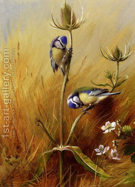 Bluetits On A Teasel 2 by Archibald Thorburn - Reproduction Oil Painting