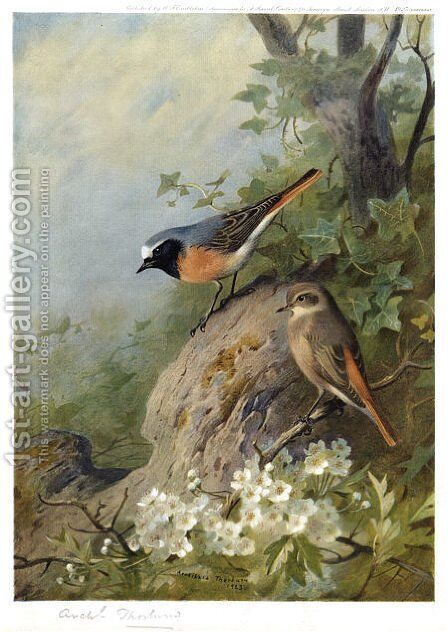 Cock and Hen Redstarts by Archibald Thorburn - Reproduction Oil Painting