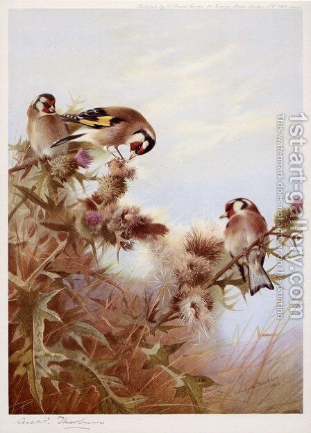 Goldfinches on Thistles by Archibald Thorburn - Reproduction Oil Painting