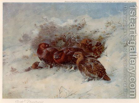 Grouse Sheltering by Archibald Thorburn - Reproduction Oil Painting