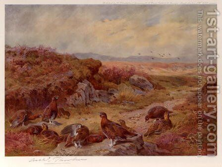Grouse on the Peat Bogs by Archibald Thorburn - Reproduction Oil Painting