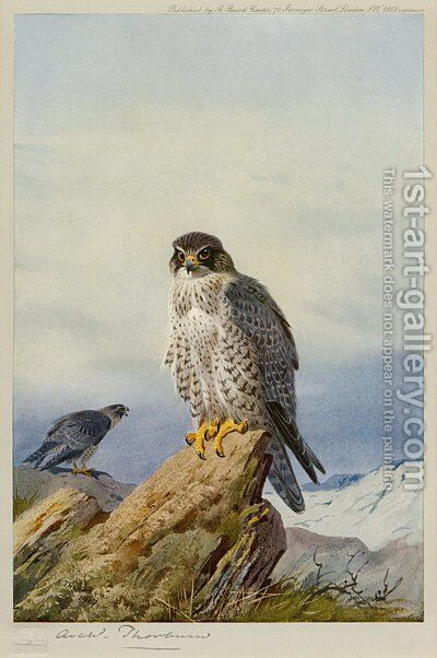 Gyr-Falcon by Archibald Thorburn - Reproduction Oil Painting