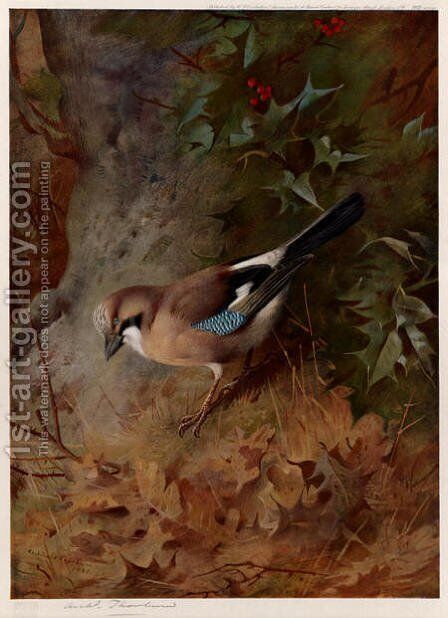 Jay by Archibald Thorburn - Reproduction Oil Painting