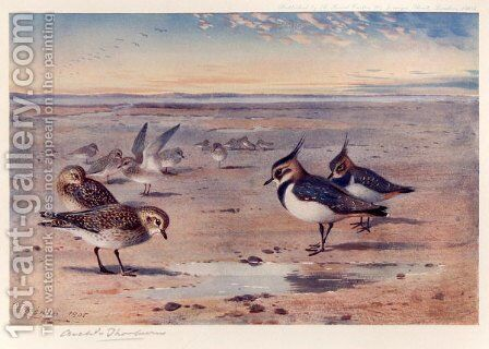 Lapwing and Golden Plover by Archibald Thorburn - Reproduction Oil Painting
