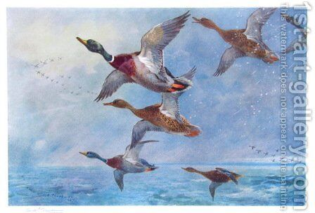 Mallard in Squally Weather by Archibald Thorburn - Reproduction Oil Painting