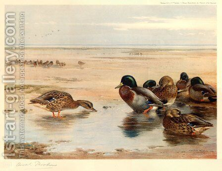 Mallard on the Shore by Archibald Thorburn - Reproduction Oil Painting