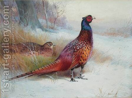 Old English Pheasant by Archibald Thorburn - Reproduction Oil Painting