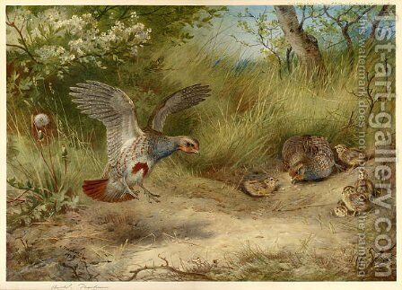 Partridges and Young by Archibald Thorburn - Reproduction Oil Painting