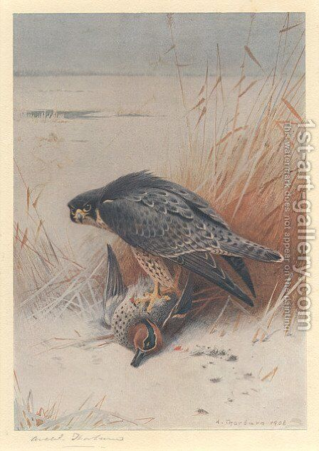 Peregrine Falcon on Teal by Archibald Thorburn - Reproduction Oil Painting