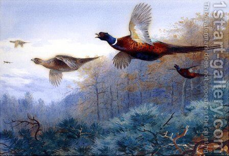 Pheasants in Flight by Archibald Thorburn - Reproduction Oil Painting