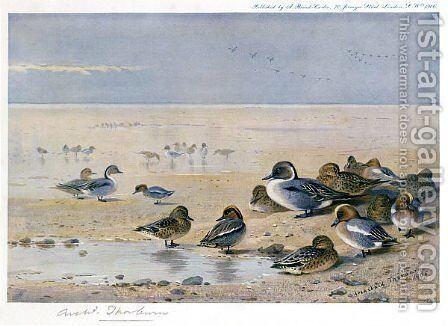 Pintail, Wigeon and Teal by Archibald Thorburn - Reproduction Oil Painting
