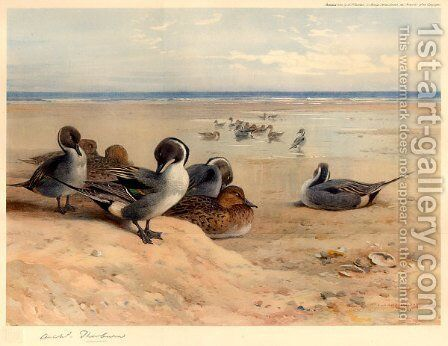 Pintails on the Shore by Archibald Thorburn - Reproduction Oil Painting