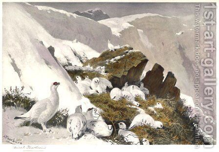 Ptarmigan on Snow Slip by Archibald Thorburn - Reproduction Oil Painting