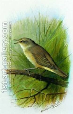 Reed Warbler by Archibald Thorburn - Reproduction Oil Painting