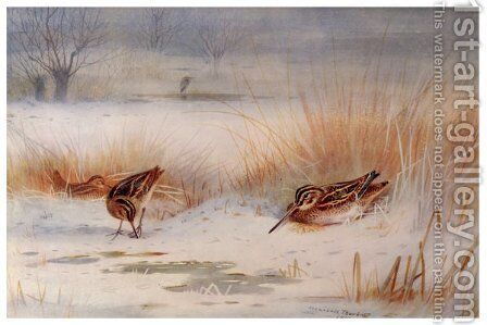 Snipe by Archibald Thorburn - Reproduction Oil Painting