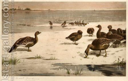Unapproachable Geese by Archibald Thorburn - Reproduction Oil Painting