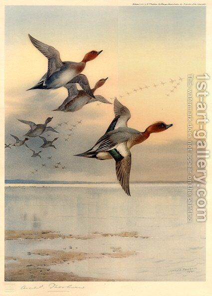Wigeon Over the Estuary by Archibald Thorburn - Reproduction Oil Painting