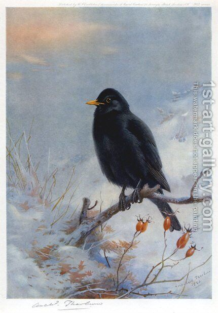 Winter Blackbird by Archibald Thorburn - Reproduction Oil Painting