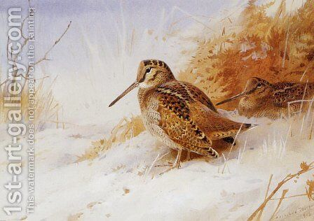 Winter Woodcock by Archibald Thorburn - Reproduction Oil Painting