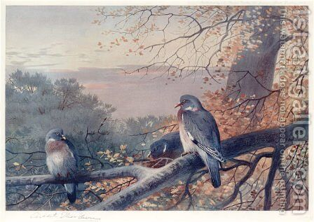 Wood Pigeons in Beech Tree by Archibald Thorburn - Reproduction Oil Painting