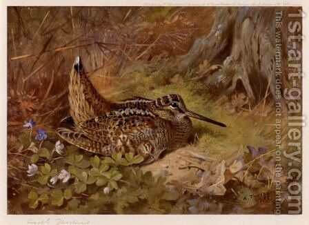 Woodcock and Dog Violets by Archibald Thorburn - Reproduction Oil Painting
