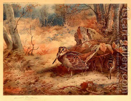 Woodcock by Archibald Thorburn - Reproduction Oil Painting
