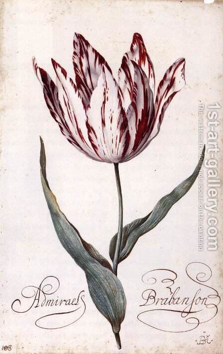 Tulip by Balthasar Van Der Ast - Reproduction Oil Painting