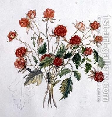 Wild Raspberry by Caroline Louisa Meredith - Reproduction Oil Painting
