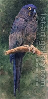 Hyacinth Macaw by Henry Stacy Marks - Reproduction Oil Painting