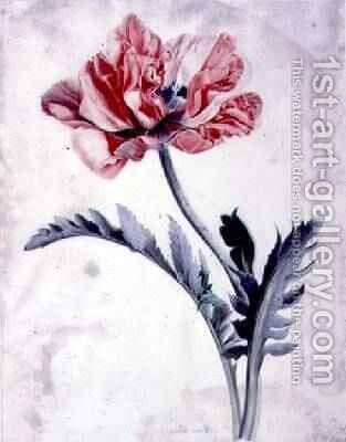 Flower Pieces Oriental Poppy by - Marie-Anne - Reproduction Oil Painting