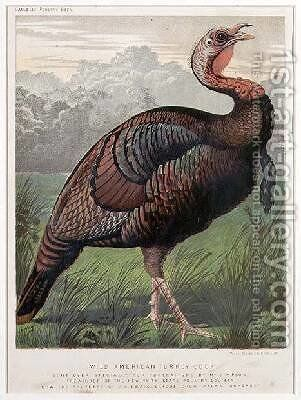 The Wild American Turkey Cock by (after) Ludlow - Reproduction Oil Painting
