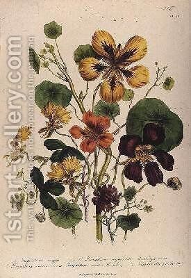 Nasturtium plate 21 from The Ladies Flower Garden by Jane Loudon - Reproduction Oil Painting