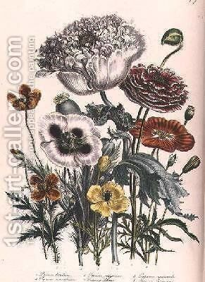 Poppies plate 4 from The Ladies Flower Garden by Jane Loudon - Reproduction Oil Painting