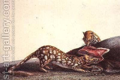 Long-tailed dasyure of New South Wales by (after) Lesueur, Charles Alexandre - Reproduction Oil Painting