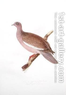 Columba gymnophthalmus by Edward Lear - Reproduction Oil Painting