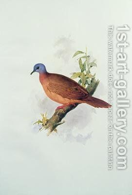 Pigeon-type by Edward Lear - Reproduction Oil Painting