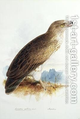 Circaetus gallicus by Edward Lear - Reproduction Oil Painting